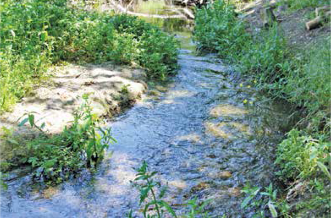 One of the meandering streams in the Tujunga Ponds Nature Preserve.
