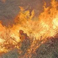 Firefighter battles to control wildfire!