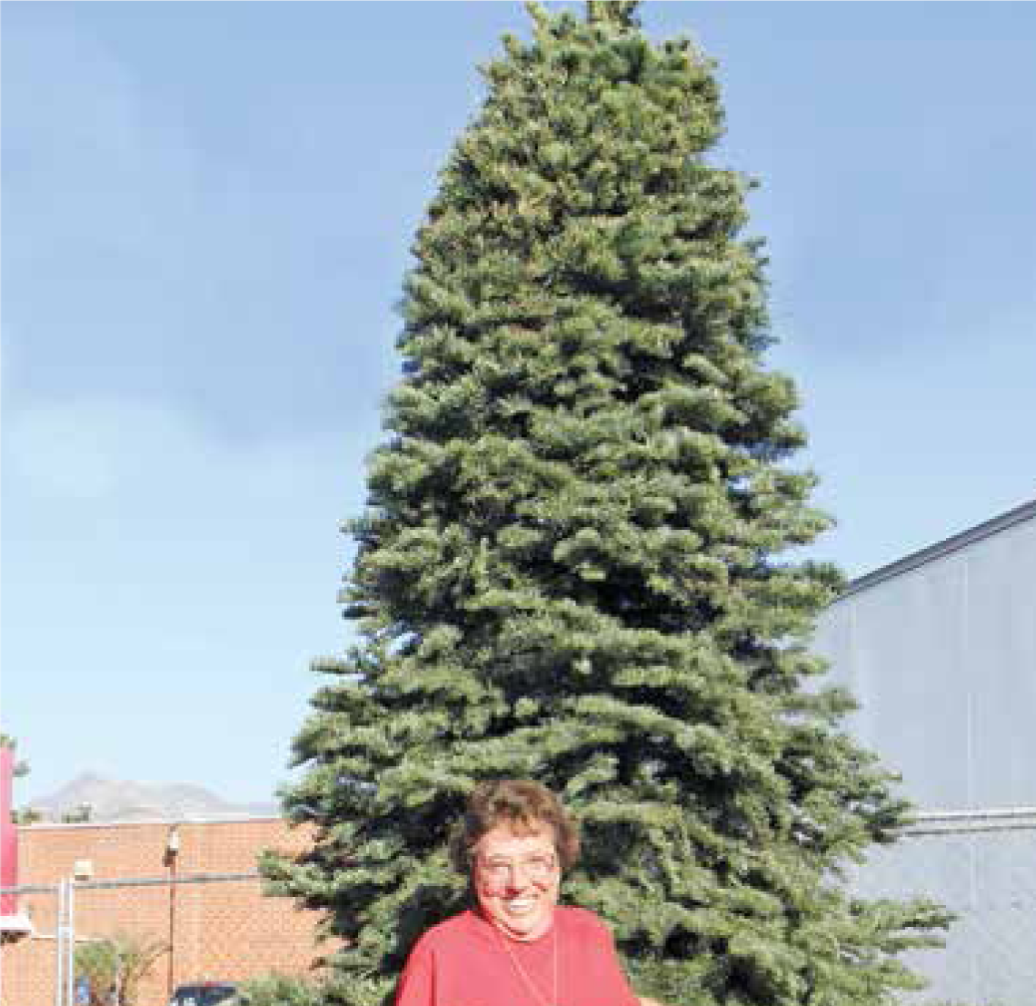 This year's 10-foot Christmas tree donated by Kathy Anthony of Kathy's Trees and awaiting your decorations to make it a beautiful sight when you enter Sunland-Tujunga from the south.