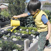 Finn Community Garden members give Elijah, 4, an opportunity to learn about plant life.